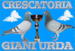 Gianiurda-porumbei voiajori