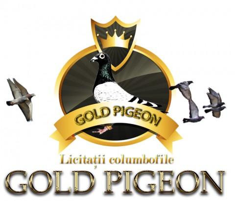 Gold Pigeon - Este activa Licitatia Iarinca Iosif !