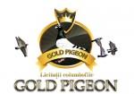 banner-gold (Custom)