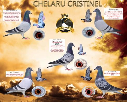 Colaj Chelaru Cristinel (Custom)