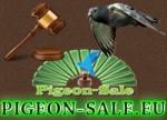 banner-pigeonsale